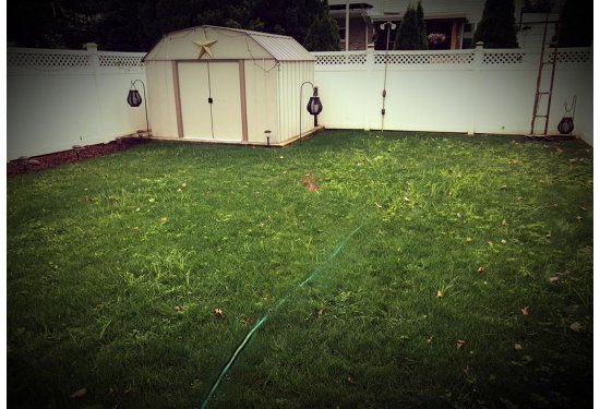 Perfect Lawn for the Neighborhood T-Ball Game
